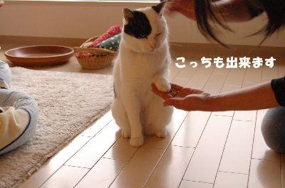 20080530福5