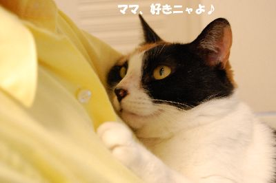 20080621mikan5.jpg