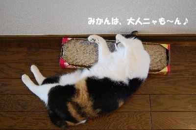 20080627mikan4.jpg