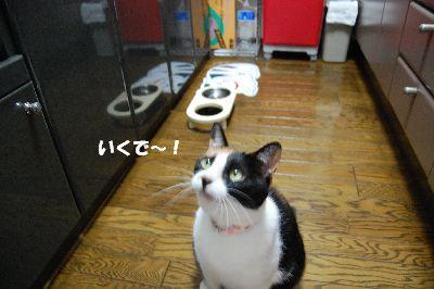 20080701mikan3.jpg
