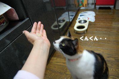 20080701mikan6.jpg