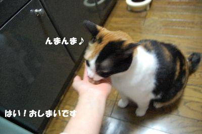 20080701mikan8.jpg