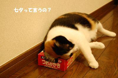 20080707mikan3.jpg