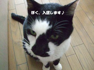 20080708sasuke7.jpg