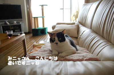 20080711mikan.jpg