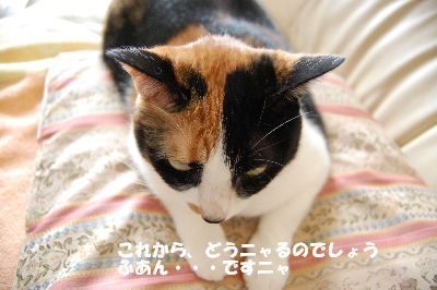 20080711mikan4.jpg