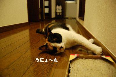 20080725mikan.jpg