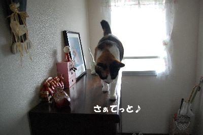 20080730mikan.jpg