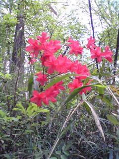八国山の春4