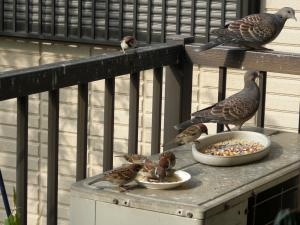 テラスの鳥たち