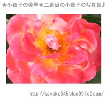 写真館Ⅱ0019