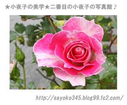 写真館Ⅱ0026