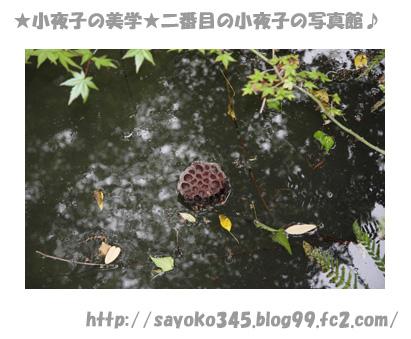 写真館Ⅱ0031