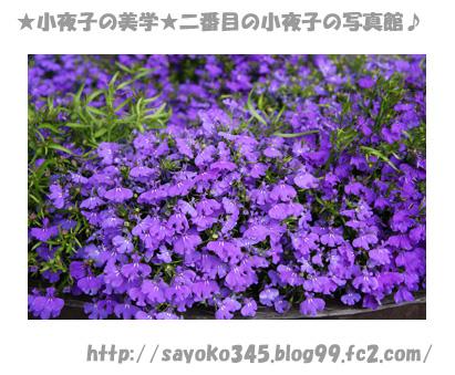 写真館Ⅱ0032