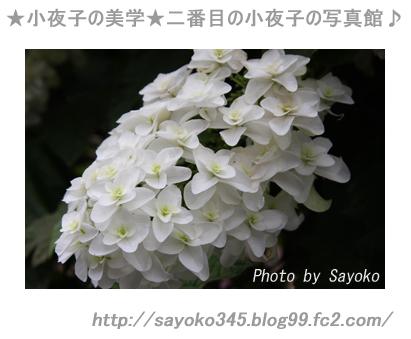 写真館Ⅱ0038
