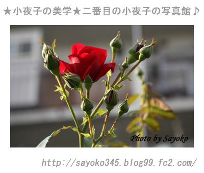 写真館Ⅱ0043