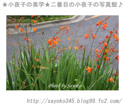 写真館Ⅱ0045