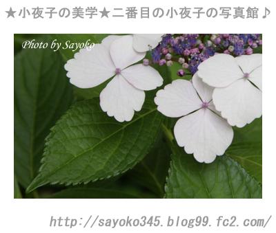 写真館Ⅱ0046