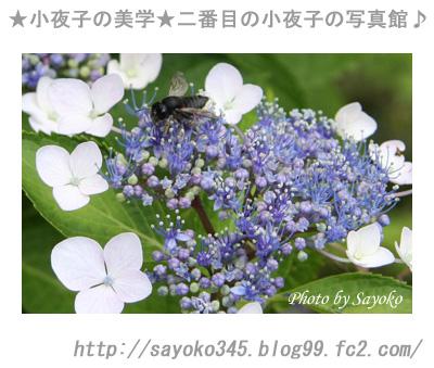 写真館Ⅱ0047