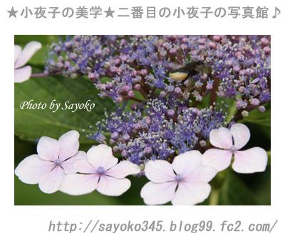 写真館Ⅱ0048