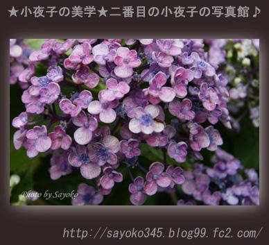 写真館Ⅱ0051