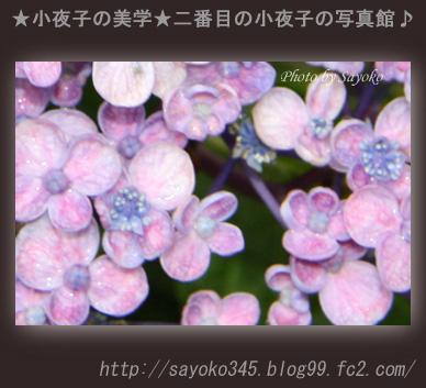 写真館Ⅱ0053