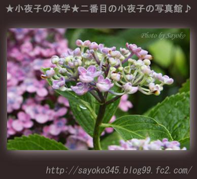 写真館Ⅱ0054