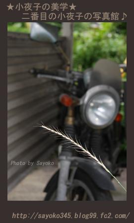 写真館Ⅱ0058