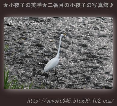 写真館Ⅱ0059
