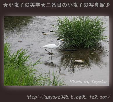 写真館Ⅱ0064