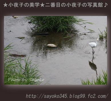 写真館Ⅱ0065