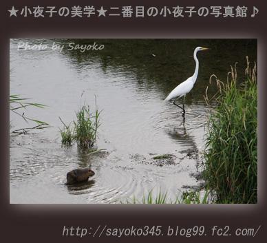 写真館Ⅱ067