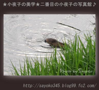 写真館Ⅱ0078