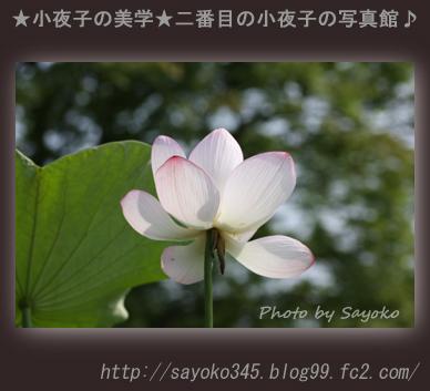 写真館Ⅱ0080
