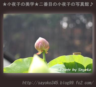 写真館Ⅱ0081