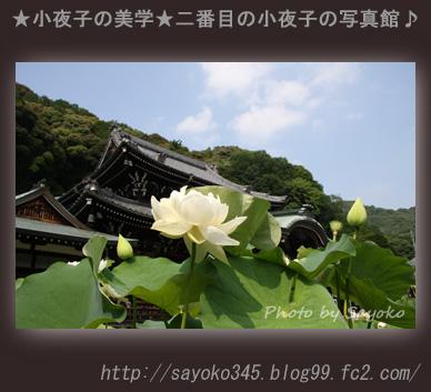 写真館Ⅱ0083