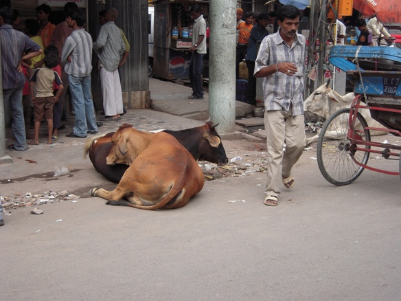 メインバザールの牛