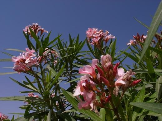 ピンク色の春