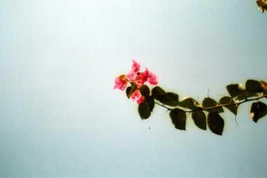 滲む花の色