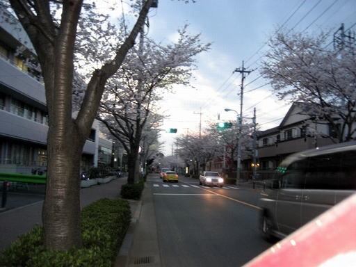 さくら(西河原公民館前)