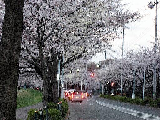 さくら(狛江住宅南)