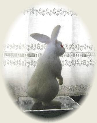 羊毛フェルト☆白ウサギ
