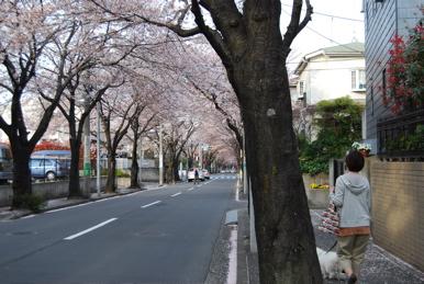 DSC_0155sakura2.jpg