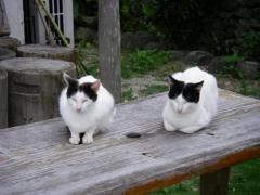 084tkcats1.jpeg