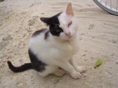 084tkcats3.jpeg