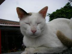 084tkcats4.jpeg