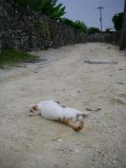 084tkcats6.jpeg