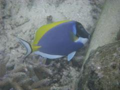 08molfish1.jpeg