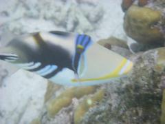 08molfish2.jpeg