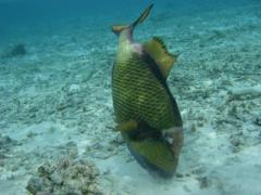 08molfish6.jpeg